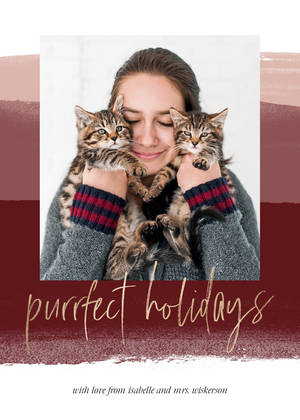 Purrfect Cat Pet Holidays