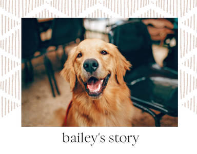 Our Story Pet Book